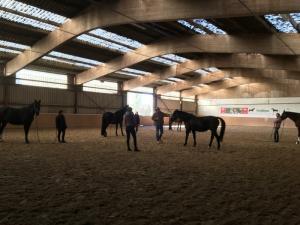 Horsemanship2
